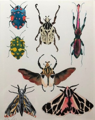 Inslee Fariss - Beetles and Bugs