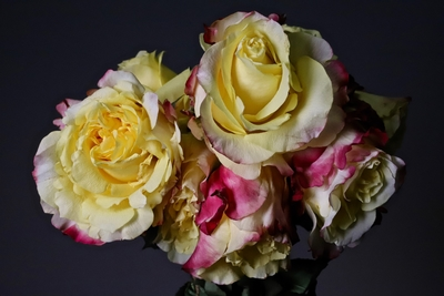 Title: Rose Bouquet 1/10 , Size: 29 x 39 , Medium: photo , Price: $950