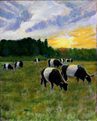 David Zimmerman - Belted Galloway Breakfast - Oil on Canvas - 16x20